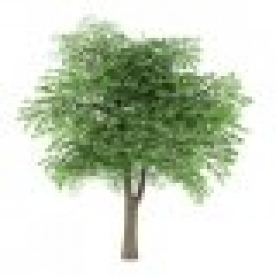 Bois de Cèdre