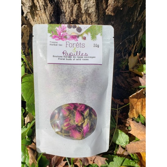 Boutons floraux de roses sauvages