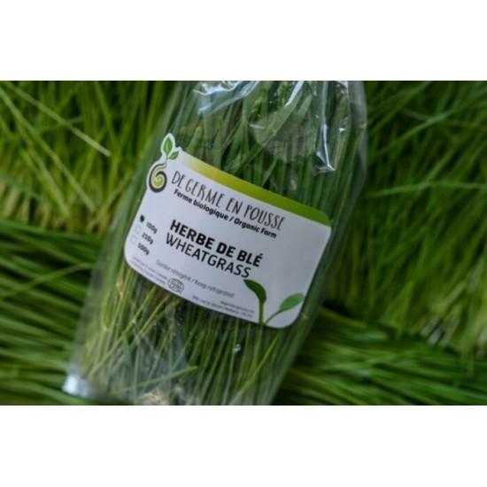 Herbe de blé bio, coupée en sac, format 500g