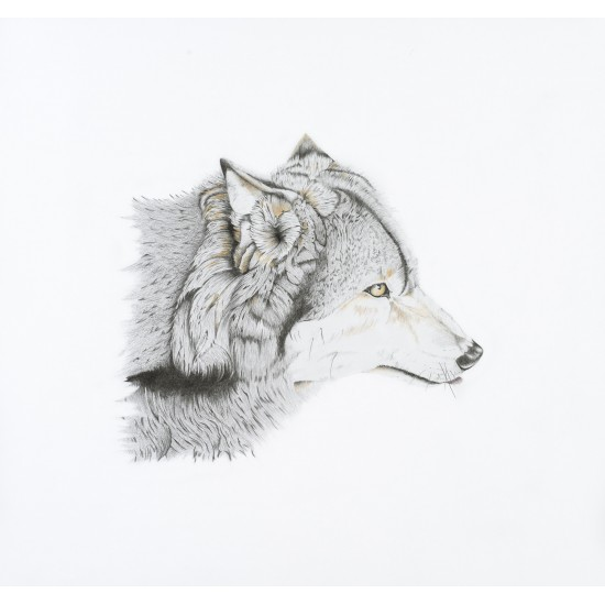 Oeuvre originale Loup gris (Canis lupus): Grey...