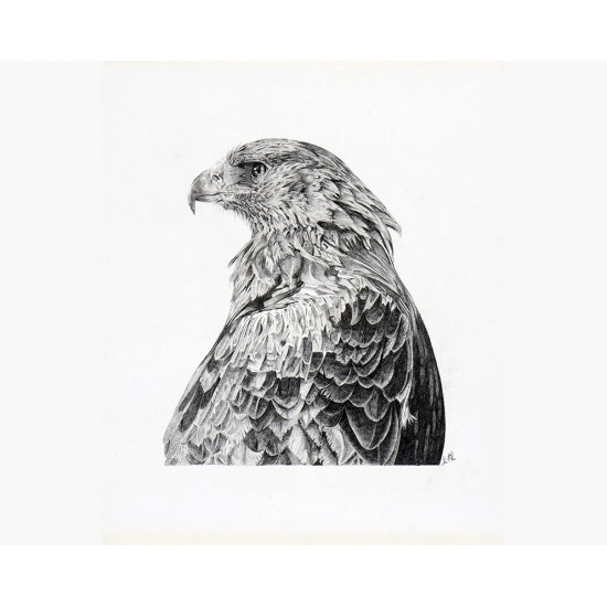 Oeuvre originale Aigle royal (Aquila chrysaetos):...