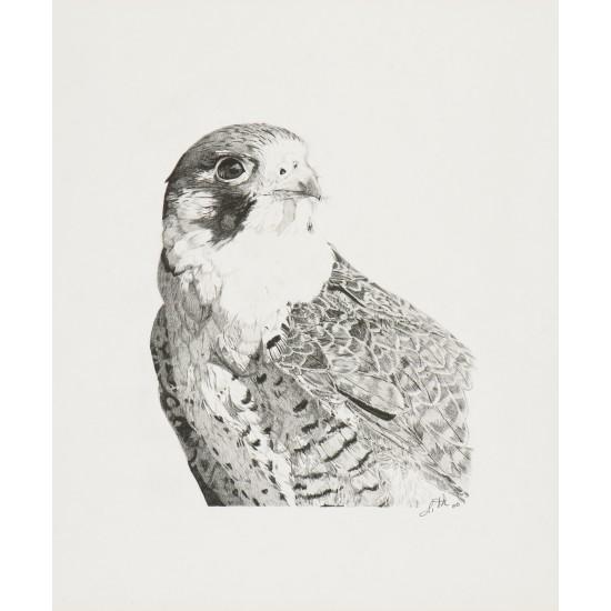 Oeuvre originale Faucon pèlerin (Falco...
