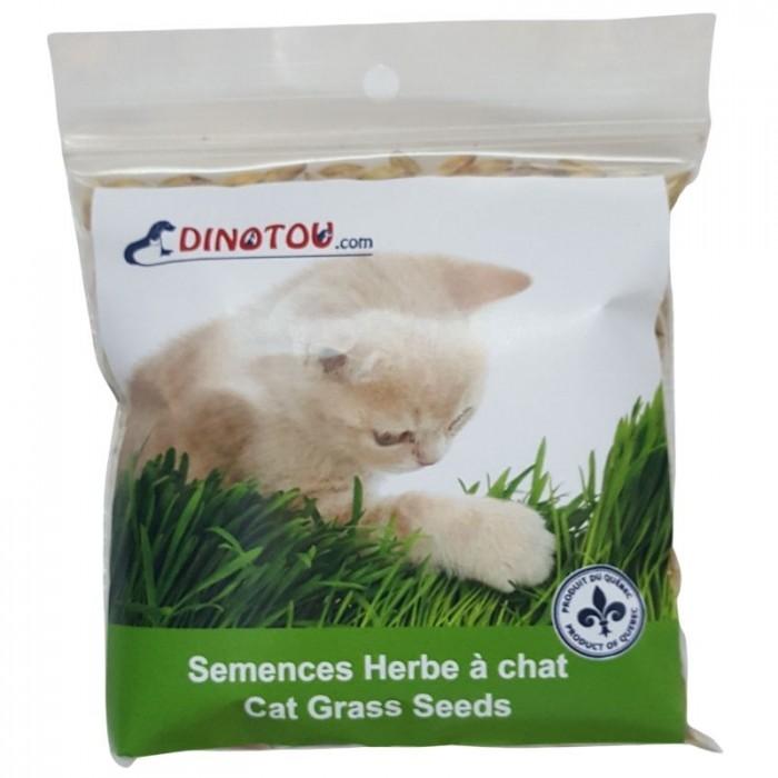graines faire pousser de l 39 herbe digestive pour chat. Black Bedroom Furniture Sets. Home Design Ideas