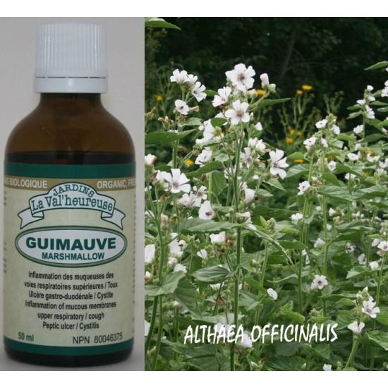Guimauve racine fra che teinture bio althaea officinalis for Antitussif maison