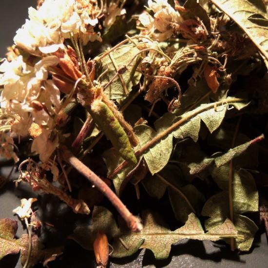 Comptonie voyageuse et fleur de thé du labrador