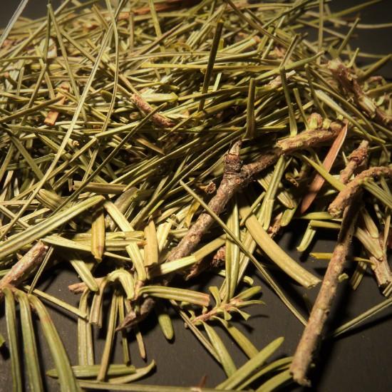 Conifère d'automne - Sapin baumier et pin blanc