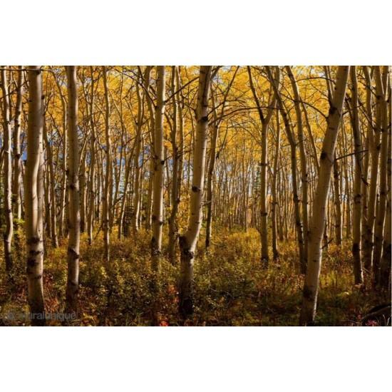 Murale Forêt Boréale  Yukon