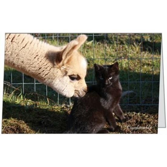 Carte Briana et le chaton